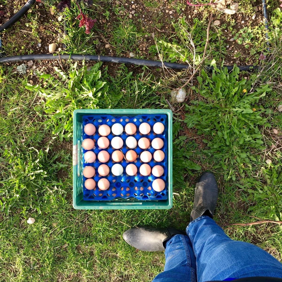 Eggs at Finnriver Farm & Cidery.