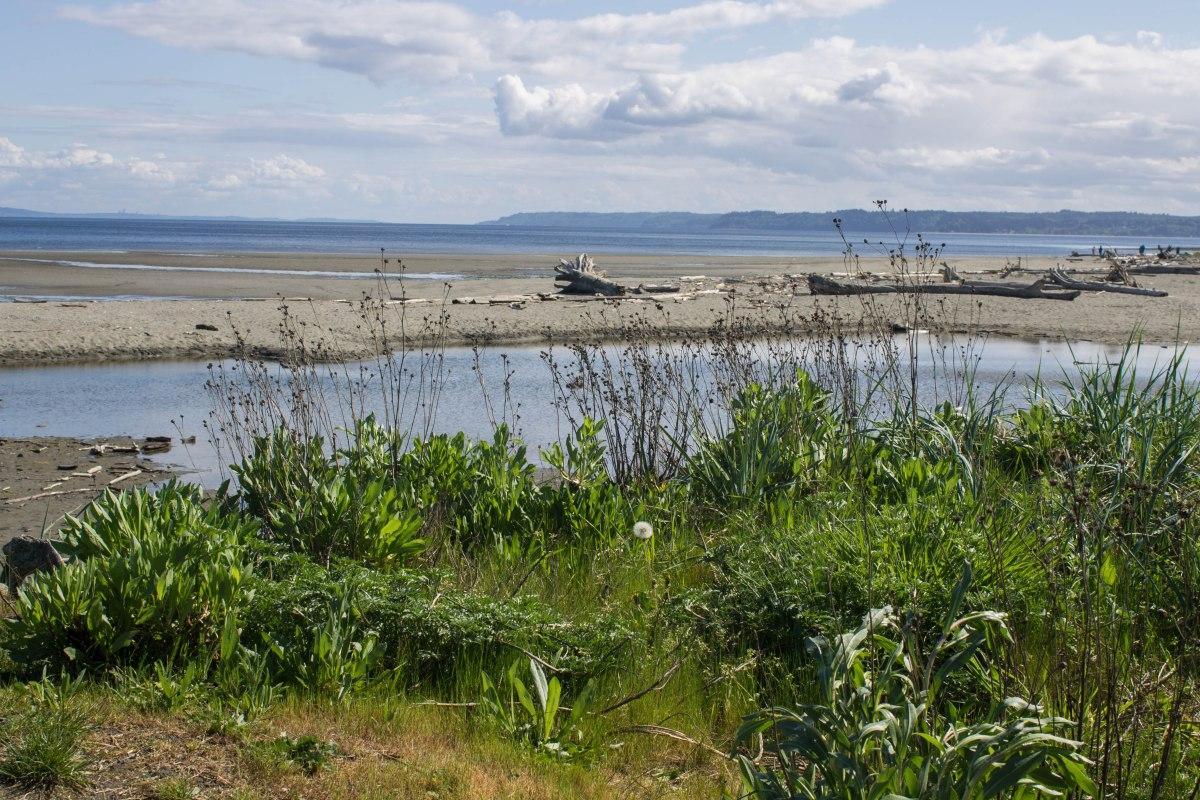 Double Bluff Beach on {Whidbey} Island. Photo by Cecilia Iliesiu.